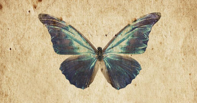 butterflyPaper