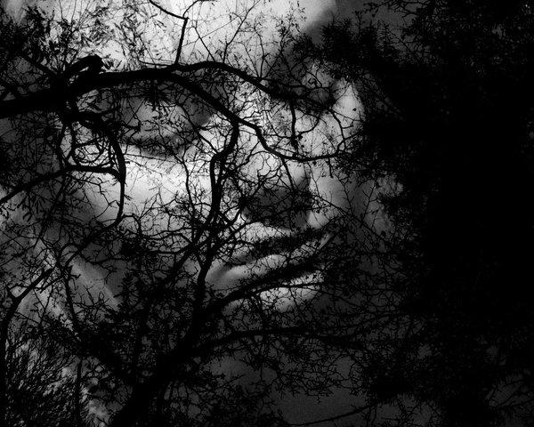 silence_by_greyguardian